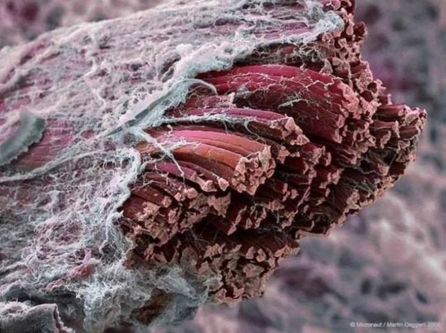 microscopes_lenses_01-20190131115721.jpg